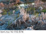 Растительность озера Эльтон (2012 год). Редакционное фото, фотограф Маргарита Волгина / Фотобанк Лори