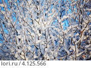 Ветки в снегу, фон. Стоковое фото, фотограф Иван Михайлов / Фотобанк Лори