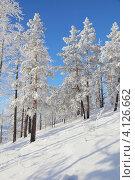 Зимний пейзаж. Иней. Стоковое фото, фотограф Виталий Горелов / Фотобанк Лори