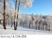 Зимний лес . Иней. Стоковое фото, фотограф Виталий Горелов / Фотобанк Лори