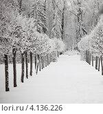 Купить «Зимняя аллея в парке», фото № 4136226, снято 15 января 2010 г. (c) Иван Михайлов / Фотобанк Лори