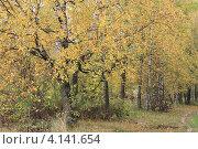Золотая осень. Стоковое фото, фотограф Елена Скрипина / Фотобанк Лори