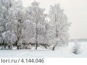 Березы в инее на берегу озера. Стоковое фото, фотограф Кекяляйнен Андрей / Фотобанк Лори