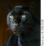 Купить «Чёрная пантера», фото № 4156518, снято 30 сентября 2012 г. (c) Эдуард Кислинский / Фотобанк Лори