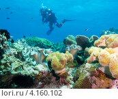 Купить «Водолаз изучает коралловый риф», фото № 4160102, снято 7 мая 2012 г. (c) Сергей Дубров / Фотобанк Лори