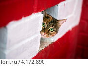 Купить «Морда кота крупным планом, выглядывающая из-за стены», фото № 4172890, снято 27 декабря 2012 г. (c) Николай Винокуров / Фотобанк Лори