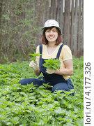 Купить «Молодая женщина собирает крапиву в саду весной», фото № 4177326, снято 13 мая 2012 г. (c) Яков Филимонов / Фотобанк Лори