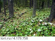 Прибайкальская тайга в сентябре. Стоковое фото, фотограф Григорий Барам / Фотобанк Лори