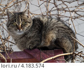 Кошка. Стоковое фото, фотограф Андрей Павлов / Фотобанк Лори