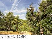 Тропа в гористой местности около Тосса де Мар (Испания) (2012 год). Стоковое фото, фотограф Алексей Яковлев / Фотобанк Лори
