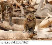 Обезьяна на старой коряге в зоопарке. Стоковое фото, фотограф Shlomo Polonsky / Фотобанк Лори
