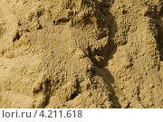 Купить «Песок после дождя», фото № 4211618, снято 21 сентября 2009 г. (c) Оксана Ковач / Фотобанк Лори