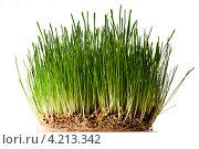 Зеленая трава. Стоковое фото, фотограф Андрей Дыкун / Фотобанк Лори