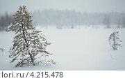 Купить «Вьюга на лесном заснеженном болоте, Карелия», видеоролик № 4215478, снято 22 января 2013 г. (c) Кекяляйнен Андрей / Фотобанк Лори