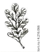 Купить «Графический рисунок дубового листа», иллюстрация № 4216066 (c) Astronira / Фотобанк Лори