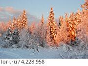 Деревья с подсветкой (2008 год). Стоковое фото, фотограф Катерина Берг / Фотобанк Лори