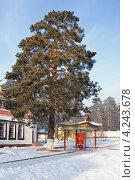 Молитвенный барабан под сосной. Читинский дацан «Дамба Брайбунлинг» (2013 год). Редакционное фото, фотограф Александр Щепин / Фотобанк Лори