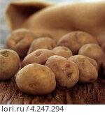 Купить «Неочищенный картофель», фото № 4247294, снято 16 января 2019 г. (c) Food And Drink Photos / Фотобанк Лори