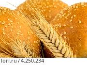 Купить «Колосок и три булочки с кунжутом крупным планом», фото № 4250234, снято 5 января 2013 г. (c) Артем Авилов / Фотобанк Лори
