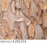 Купить «Деревянная текстура. Крымская сосна», фото № 4255614, снято 5 января 2012 г. (c) Анна Полторацкая / Фотобанк Лори