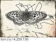 Рисунок бабочки. Стоковая иллюстрация, иллюстратор Леонид Русанов / Фотобанк Лори