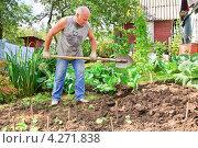 Купить «Мужчина вскапывает грядку на огороде», эксклюзивное фото № 4271838, снято 19 августа 2012 г. (c) Алёшина Оксана / Фотобанк Лори