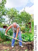 Купить «Мужчина вскапывает грядку на огороде», эксклюзивное фото № 4271886, снято 19 августа 2012 г. (c) Алёшина Оксана / Фотобанк Лори