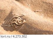 Морской червь. Стоковое фото, фотограф Дмитрий Рычков / Фотобанк Лори