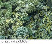 Подводный мир. Стоковое фото, фотограф Дарья Фролова / Фотобанк Лори