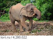 Слон. Стоковое фото, фотограф Екатерина Васенина / Фотобанк Лори