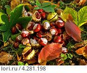 Опавшие созревшие плоды каштана в листве. Стоковое фото, фотограф Валерий Шитов / Фотобанк Лори
