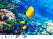 Купить «Кораллы и рыбы в Красном море. Египет, Африка.», фото № 4291426, снято 8 сентября 2012 г. (c) Vitas / Фотобанк Лори