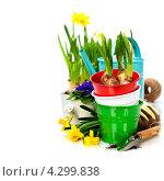Купить «Весенние луковичные цветы и садовые инструменты», фото № 4299838, снято 11 февраля 2013 г. (c) Наталия Кленова / Фотобанк Лори