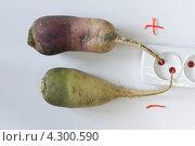 Купить «Овощи - индикаторы электрического тока», фото № 4300590, снято 14 февраля 2013 г. (c) Владимир Макеев / Фотобанк Лори