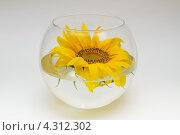 Подсолнух в круглой стеклянной вазе. Стоковое фото, фотограф Артем Свистун / Фотобанк Лори
