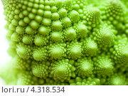 Купить «Капуста романеско, Brassica oleracea», фото № 4318534, снято 1 февраля 2013 г. (c) Morgenstjerne / Фотобанк Лори