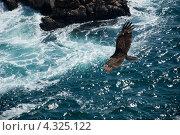 Купить «Полет над морем», фото № 4325122, снято 14 февраля 2013 г. (c) Ludenya Vera / Фотобанк Лори