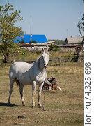 Купить «Белая лошадь», эксклюзивное фото № 4325698, снято 15 августа 2012 г. (c) Вероника / Фотобанк Лори