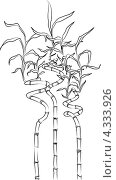 Рисунок бамбуковых веток с листьями на белом фоне. Стоковая иллюстрация, иллюстратор Ольга Алексеева / Фотобанк Лори