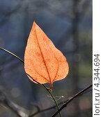 Купить «Осенний лист, контровое освещение», фото № 4344694, снято 2 января 2012 г. (c) Анна Маркова / Фотобанк Лори