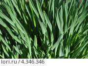 Весенняя трава под лучами солнца. Стоковое фото, фотограф Елена Стрильчук / Фотобанк Лори