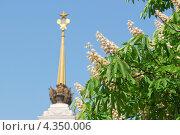 Купить «Цветущий конский каштан обыкновенный (Aesculus hippocastanum) на ВВЦ (ВДНХ)», эксклюзивное фото № 4350006, снято 17 мая 2012 г. (c) Алёшина Оксана / Фотобанк Лори