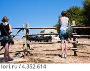 Купить «Туристы в Сафари-парке. Национальный парк Бриони. Хорватия», фото № 4352614, снято 15 августа 2012 г. (c) Николай Коржов / Фотобанк Лори