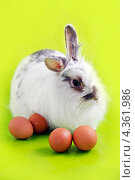 Белый кролик и куриные яйца. Стоковое фото, фотограф CHERKAUSKAS VIKTOR / Фотобанк Лори