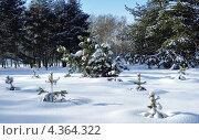 Купить «Маленькие сосны на заснеженной поляне в зимнем парке», фото № 4364322, снято 20 февраля 2012 г. (c) Михаил Марковский / Фотобанк Лори