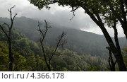 Тропический лес в национальном парке Montecristo в Сальвадоре,  таймлапс (2013 год). Стоковое видео, видеограф Soft light / Фотобанк Лори