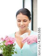 Купить «Красивая домохозяйка ухаживает за комнатным растением», фото № 4383686, снято 18 июня 2011 г. (c) Syda Productions / Фотобанк Лори