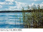 Река Волга,Тверская область (2012 год). Стоковое фото, фотограф Elena Guseva / Фотобанк Лори