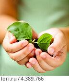 Растение в детских ладонях. Стоковое фото, фотограф Дарья Петренко / Фотобанк Лори