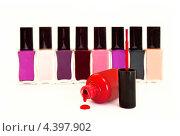 Купить «Коллекция лаков для ногтей», фото № 4397902, снято 16 февраля 2012 г. (c) Киреженкова Марина / Фотобанк Лори
